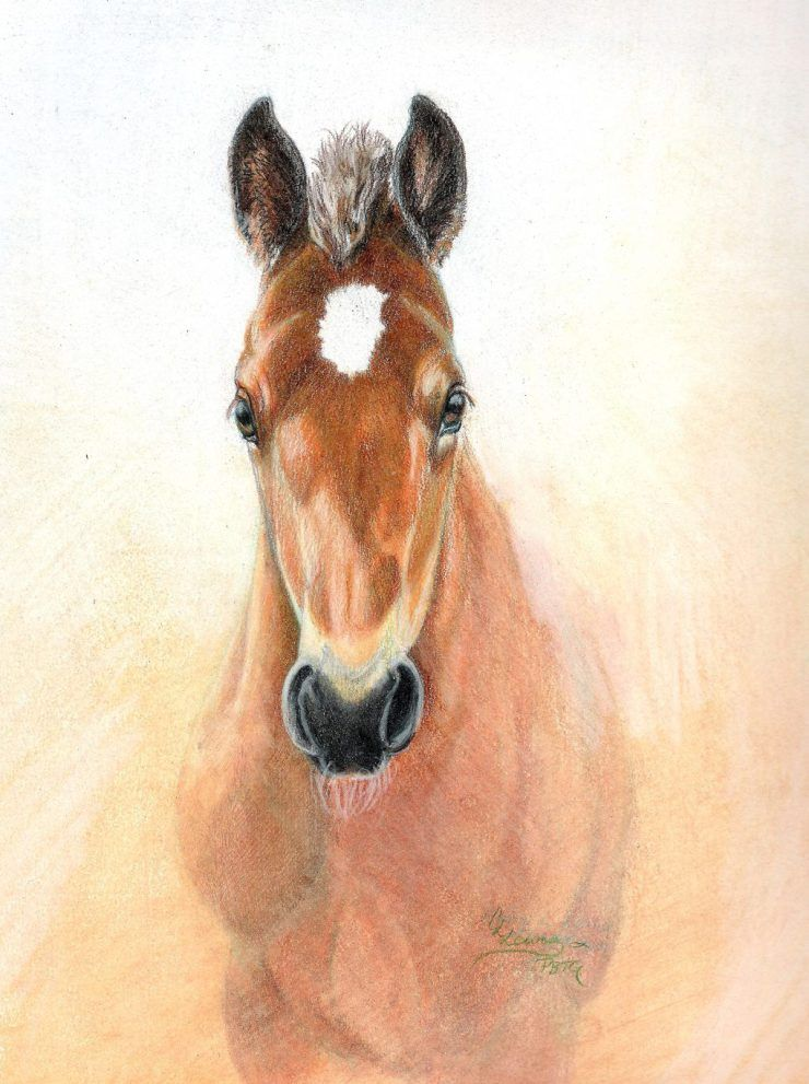 Horse Dog Drawings In Colored Pencil Carrie L Lewis Artist Color Pencil Drawing Color Pencil Art Animal Drawings