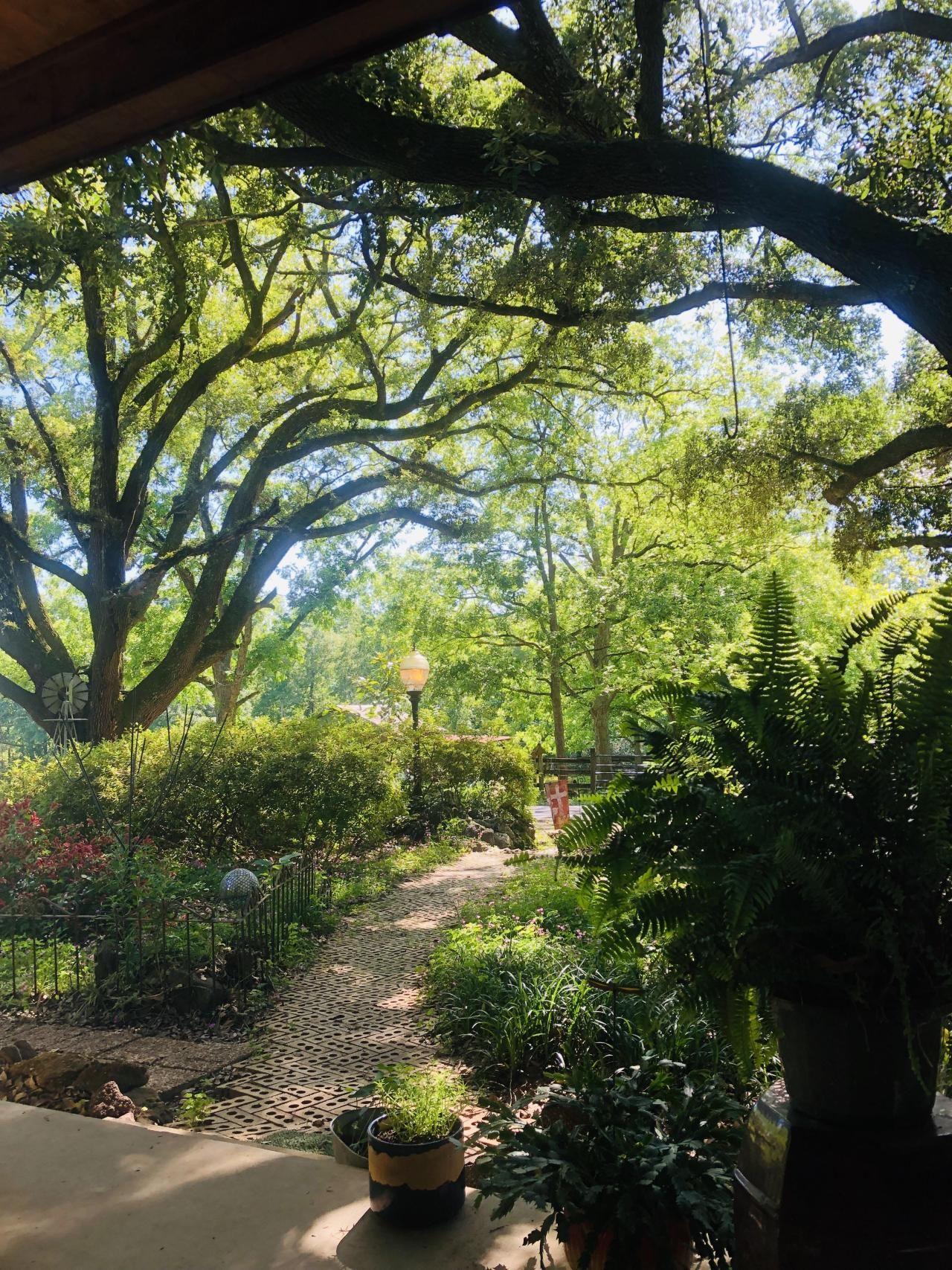 Grandmas backyard looks like a magical forest! in 2020 ...