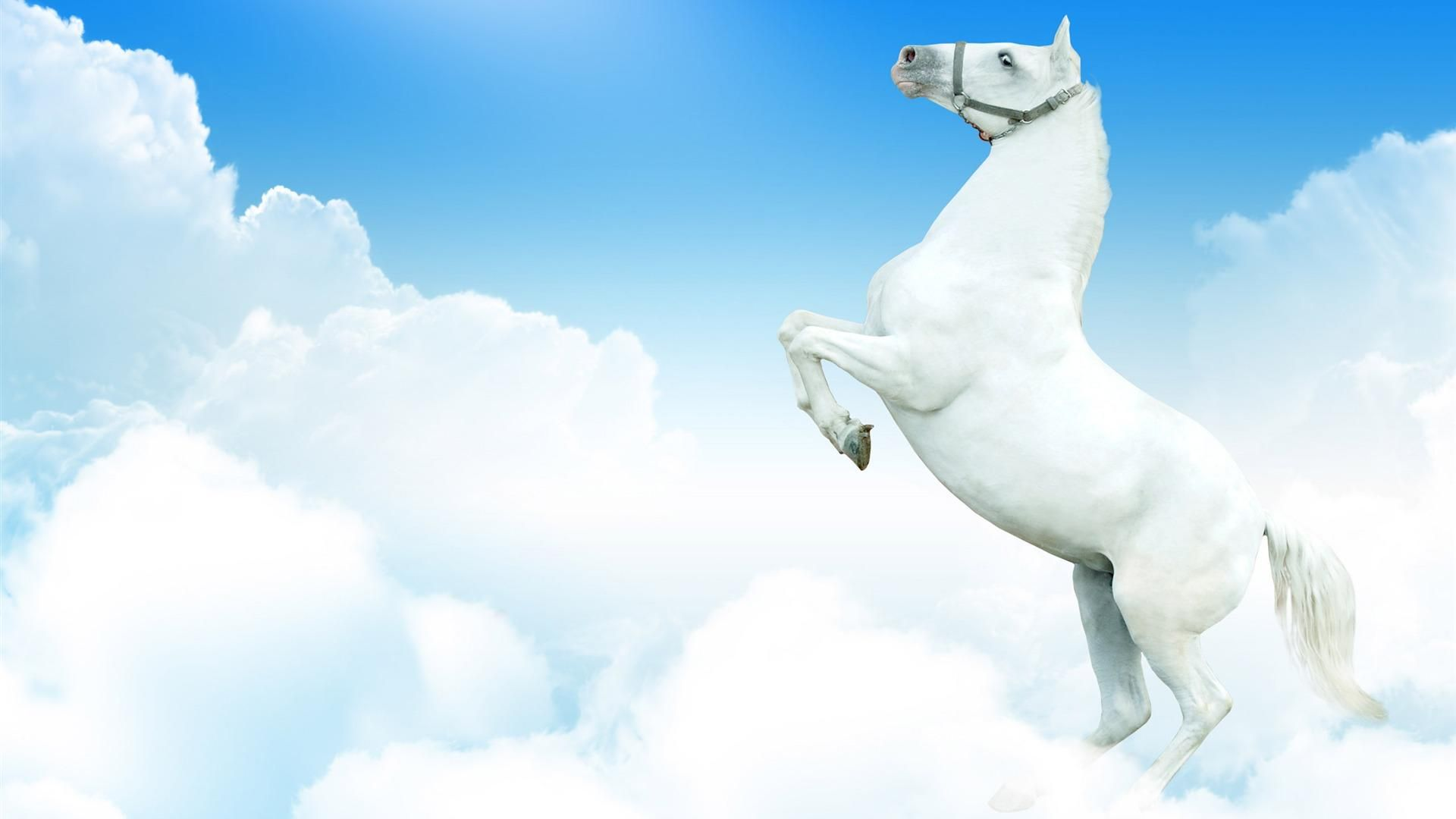 White Beautiful Horse Picture Horse Wallpaper White Horse Wallpaper Beautiful Horses