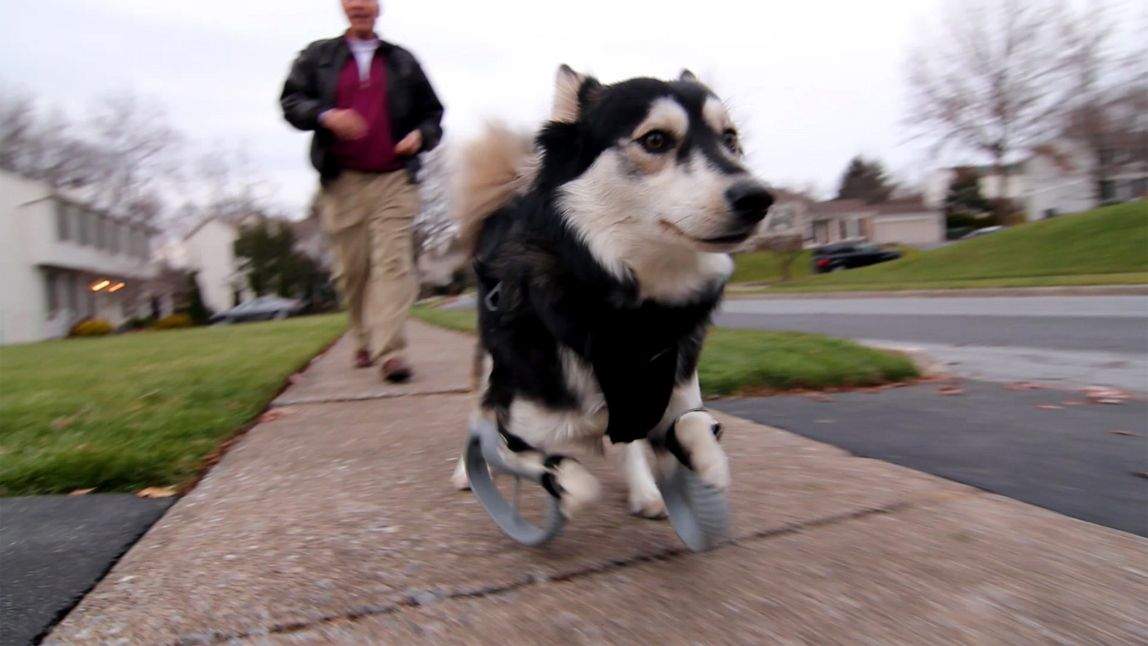 3D Printing Gives Derby the Dog a New Lease on Life