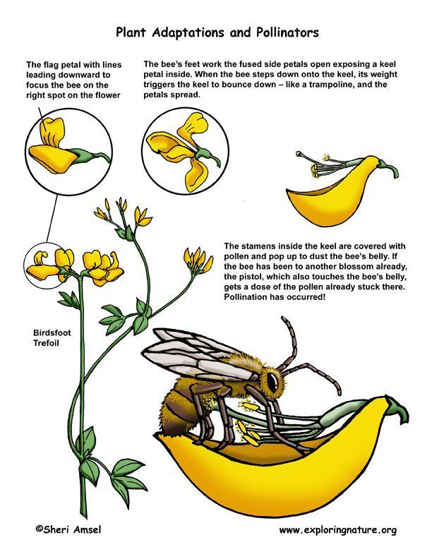 Animales- polinizacion   School- Ciencias- Plantas-3º   Pinterest ...