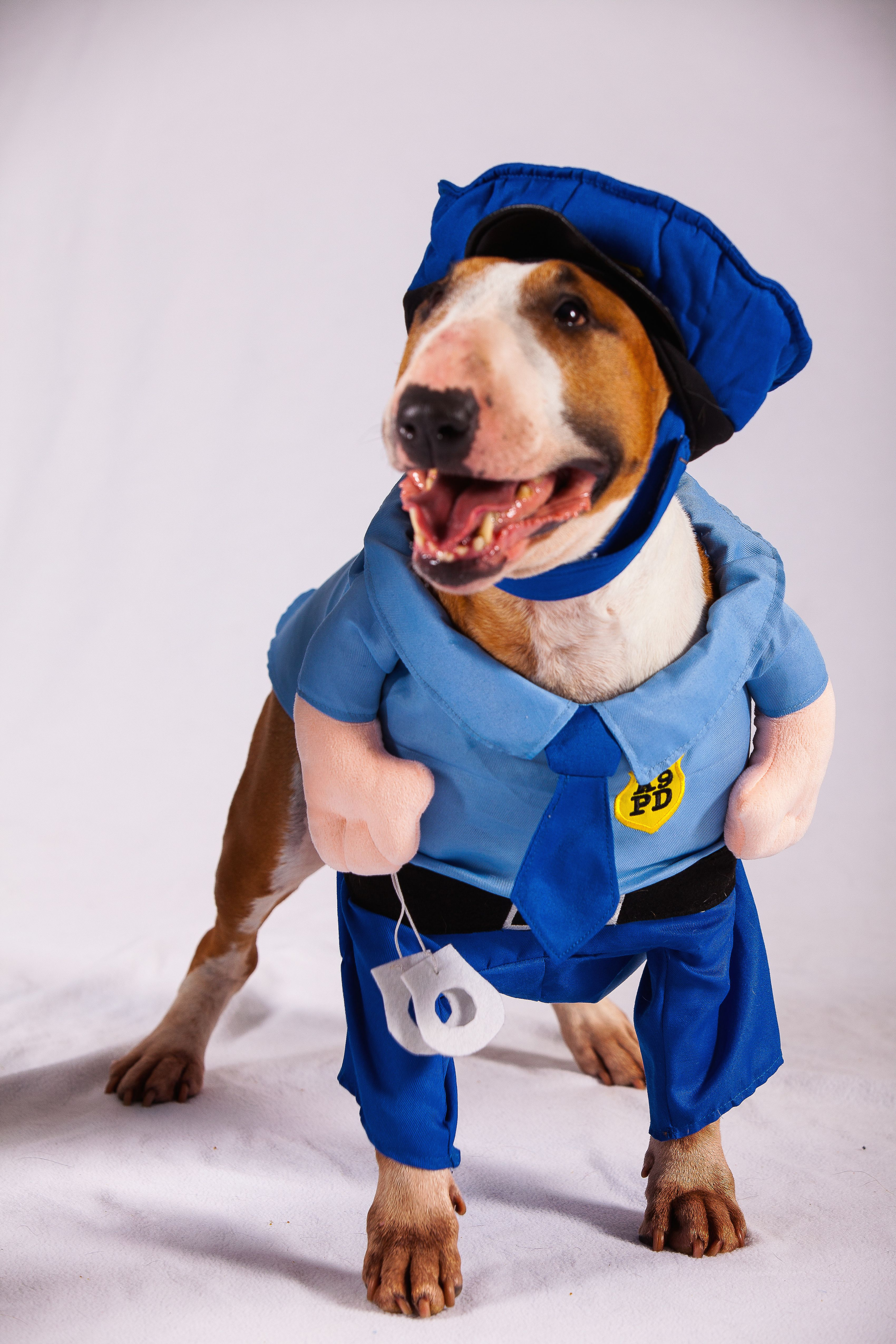 Marley\'s the police officer on duty for Halloween night! #dog ...