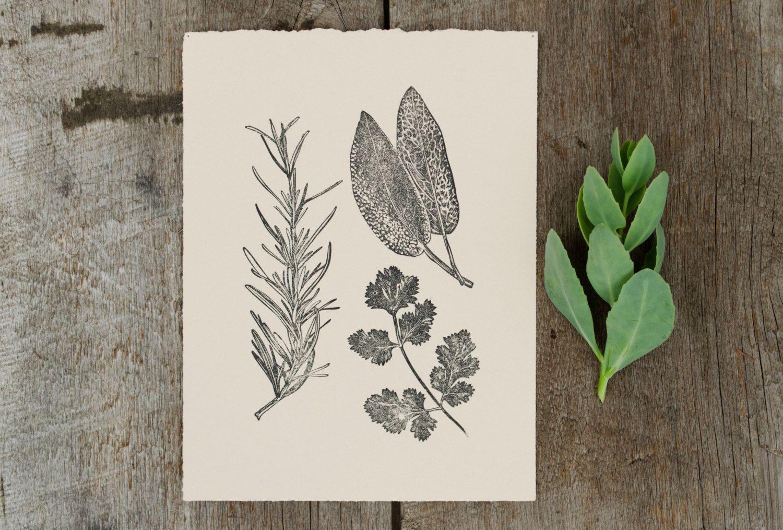 rosemary, sage, coriander, garden herbs, hand pulled linoleum