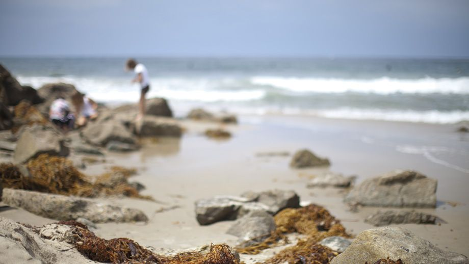 Is search for tide pool critters on the shoreline of Dana Point California.