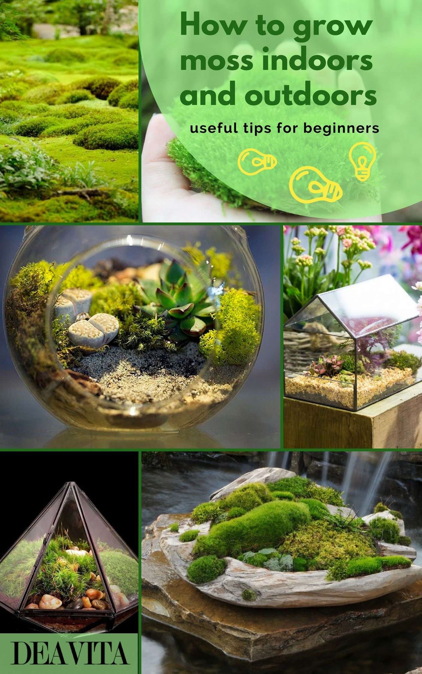 How To Grow Moss Indoors And Outdoors Useful Tips For Beginners