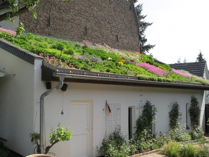 Mediterrane Dachbegrunung Gartenbau Und Landschaftsbau Aus Erftstadt Wir Planen Und Bauen Ihren Garten Landschaftsgestaltung Dachbegrunung Bauernhof Garten