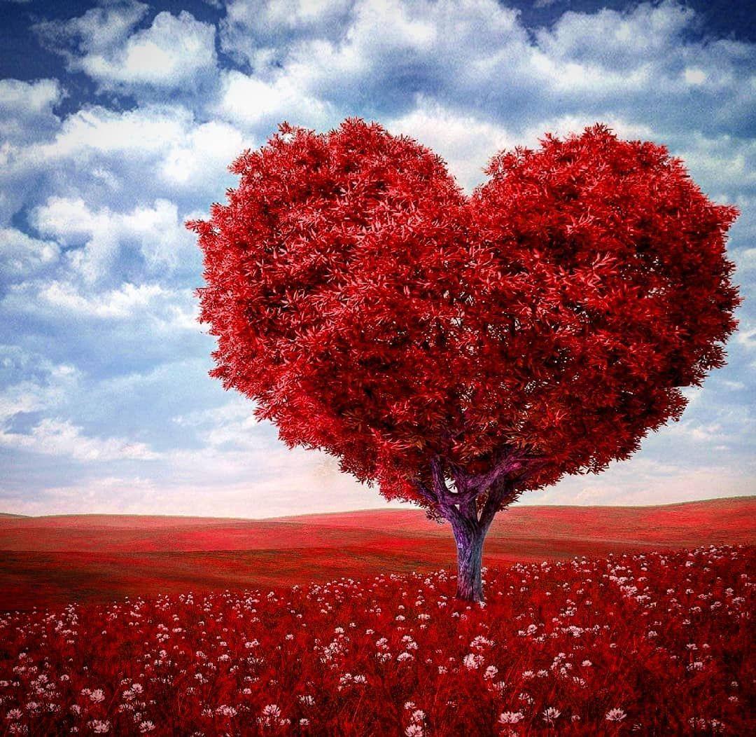 #nature #sky #sun #summer #beach #beautiful #pretty #sunset #sunrise #blue #flowers #night #tree  #nature #sky #sun #summer #beach #beautiful #pretty #sunset #sunrise #blue #flowers #night #tree #twilight #clouds #beauty #light #cloudporn #photooftheday #love #green #skylovers #dusk #weather #day #red #iphonesia #mothernature