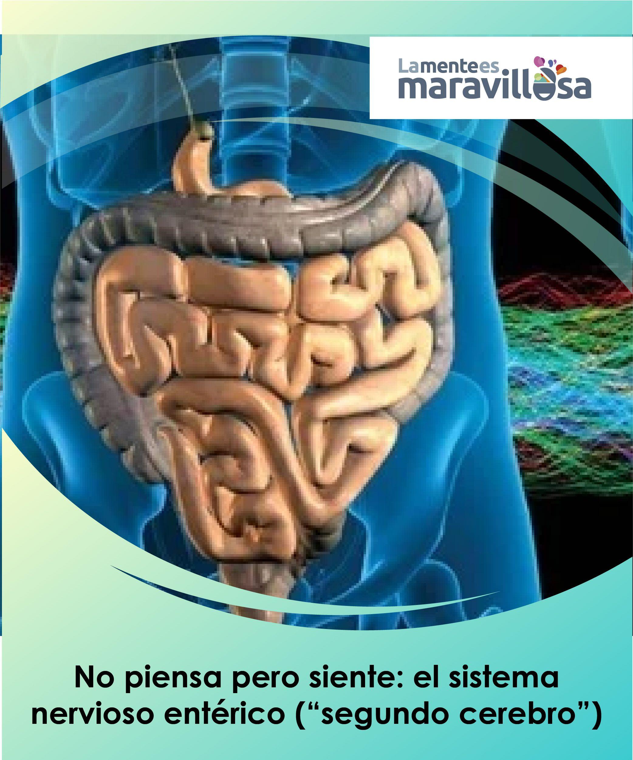 """Al #sistema #nervioso #entérico se le considera a menudo como nuestro """"# segundo #cerebro"""". En él se extiende una compleja red de más de cien  millones de ..."""