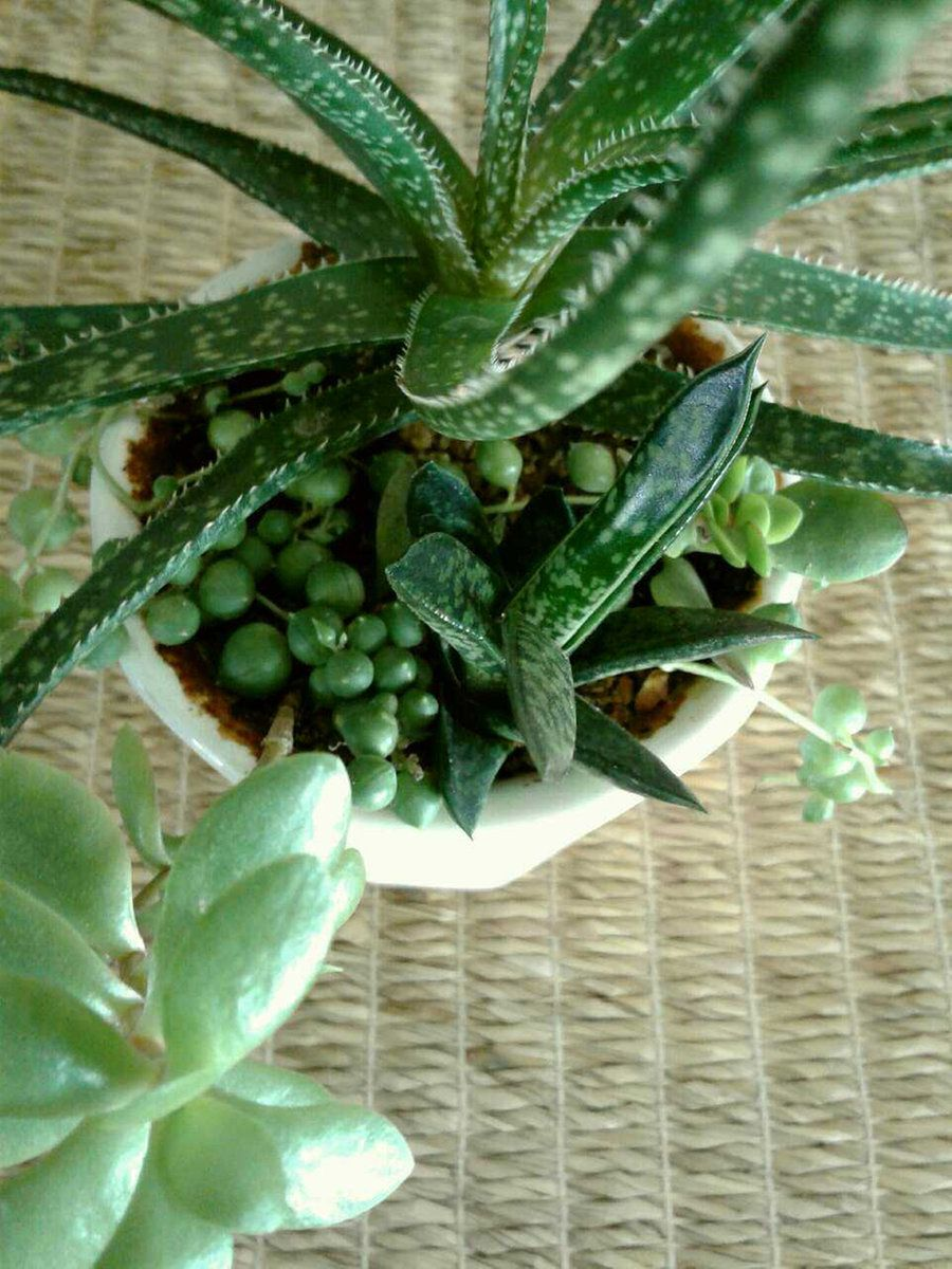 Pin on Potted Succulent Plants and Tropical Plants for