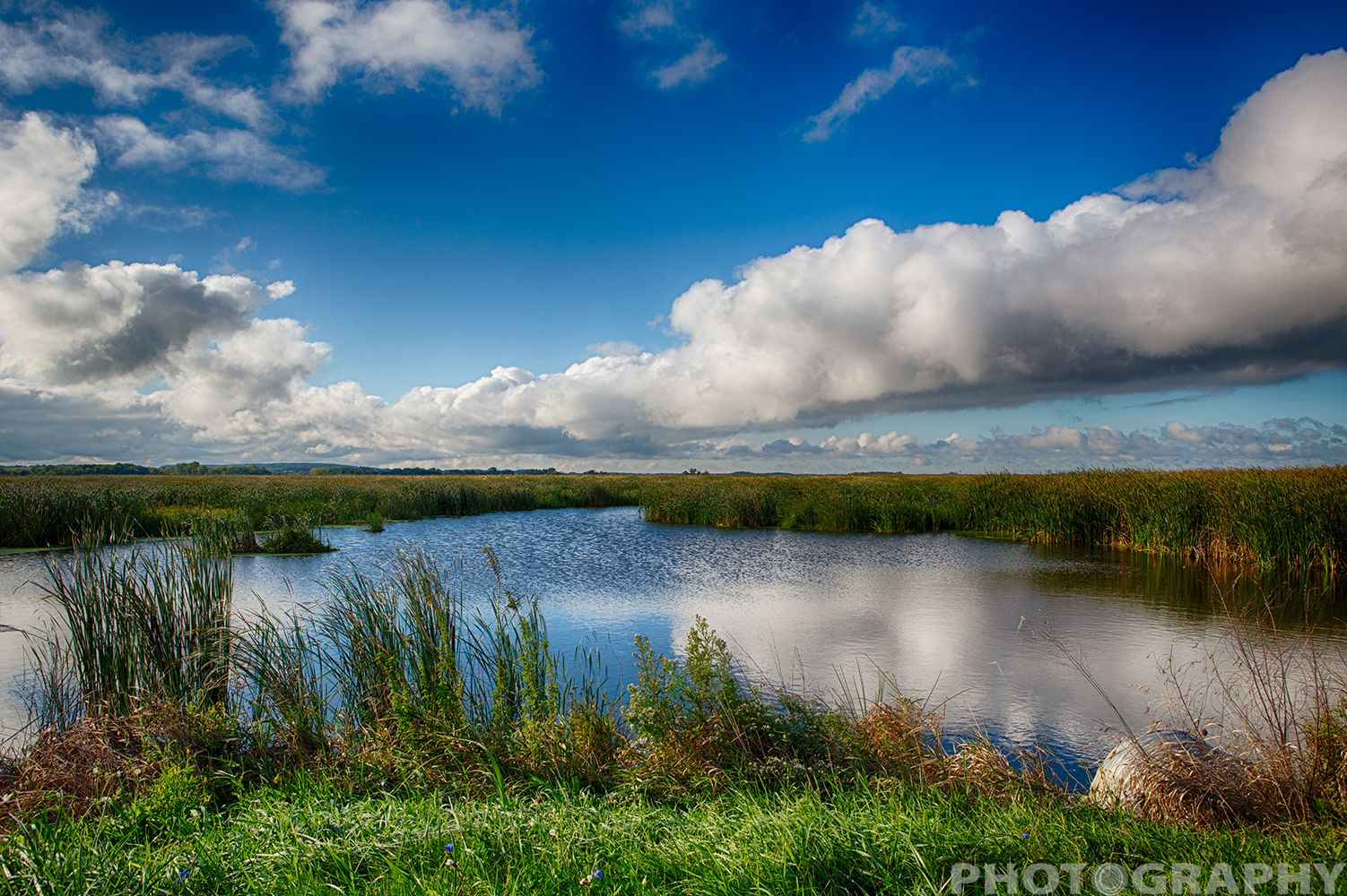Horicon Marsh Wisconsin   Copyright Ricky L. Jones Photography 1995-2014 All rights reserved.