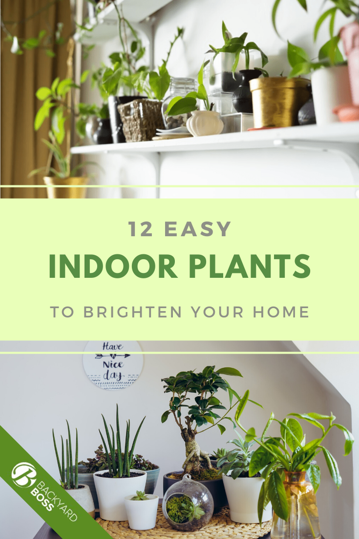 8 Best Indoor Plants Easy Houseplants For Your Home In 2020 Indoor Plants Easy Plants Low Maintenance Indoor Plants