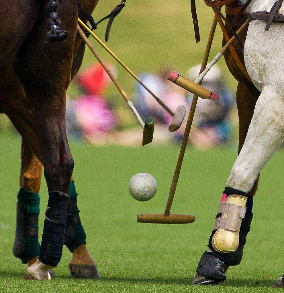 Great Shot Polo Horse Polo Polo Club