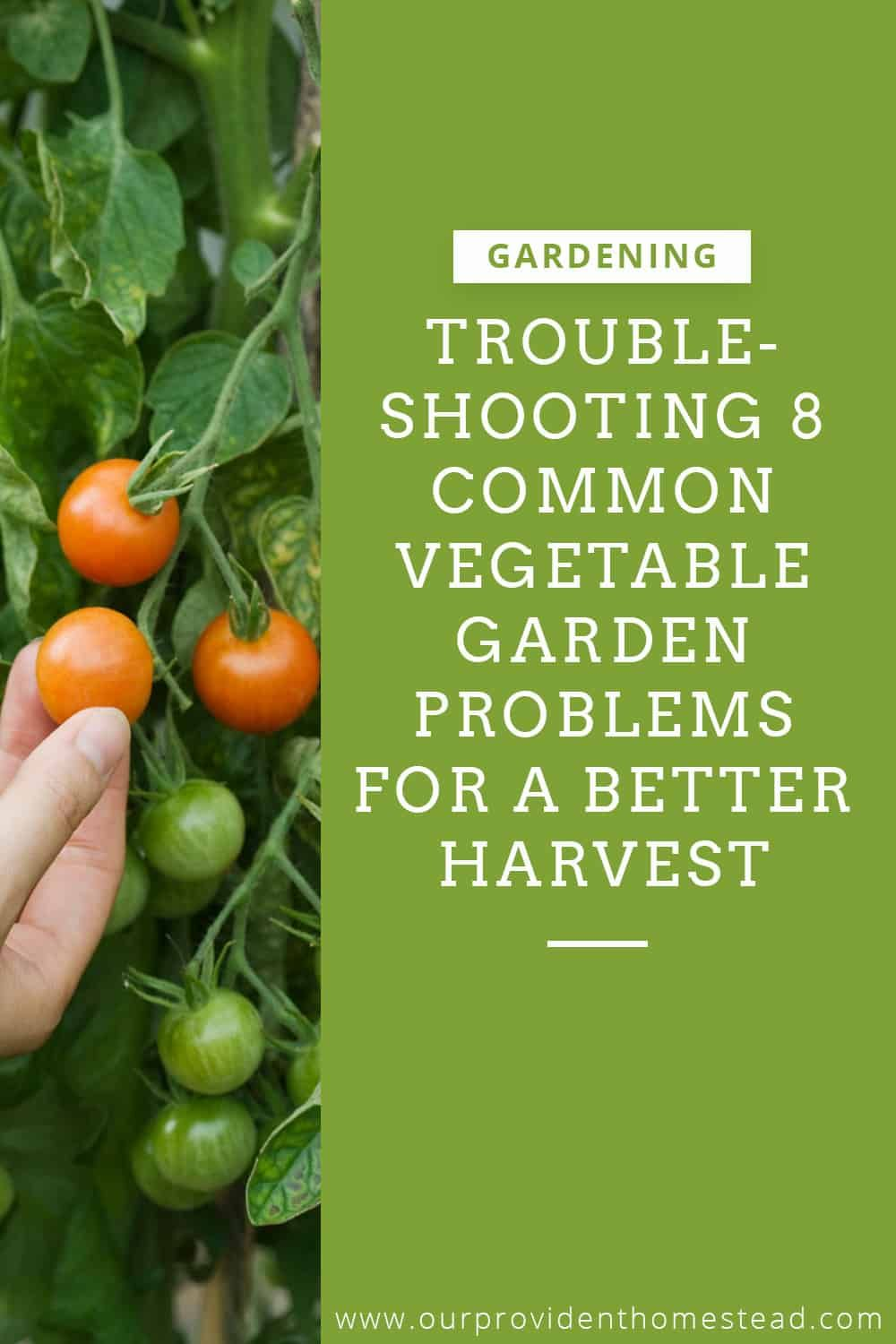 Troubleshooting 8 Common Vegetable Garden Problems So That 640 x 480