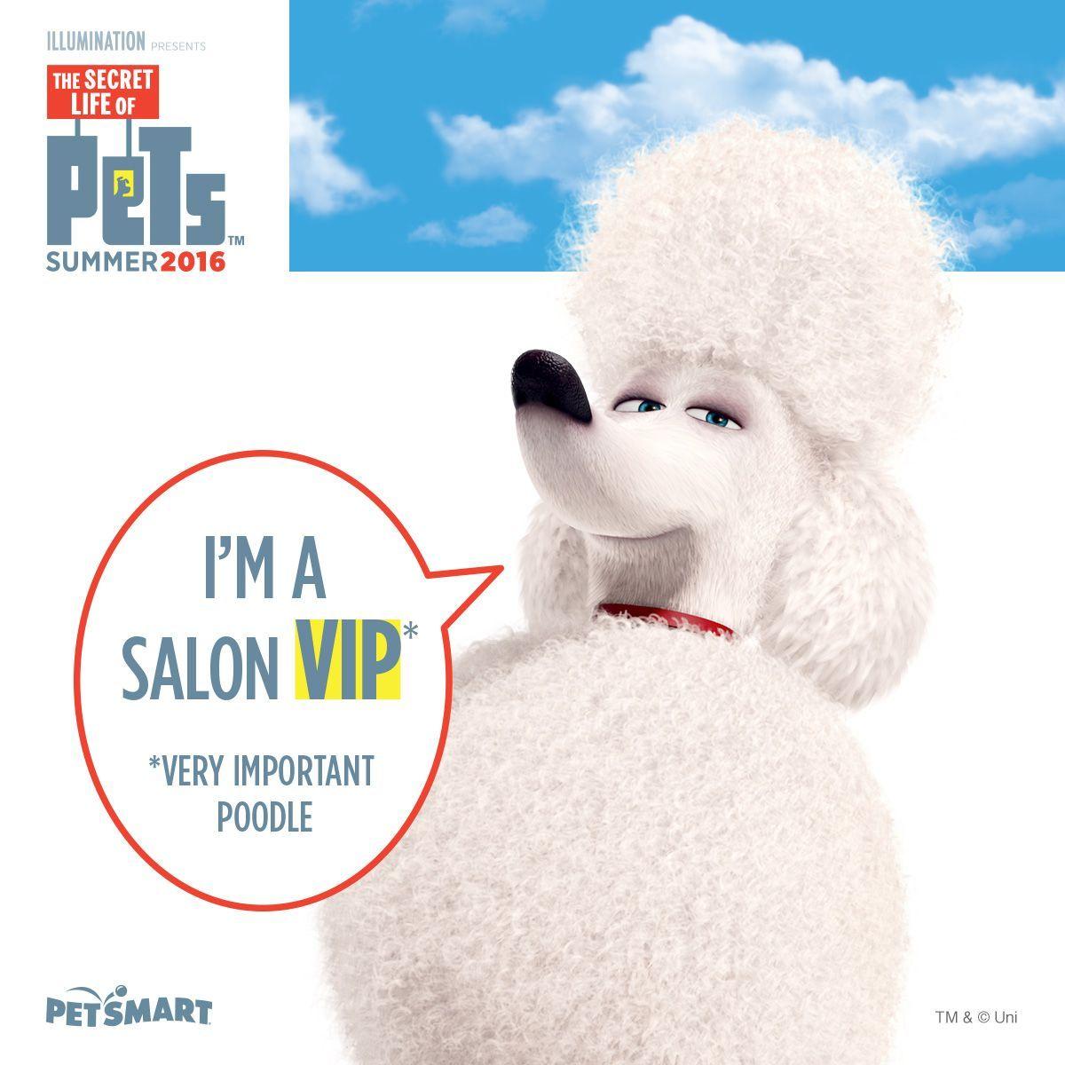 290 Dog Groomers Ideas Dog Groomers Groomer Dog Grooming