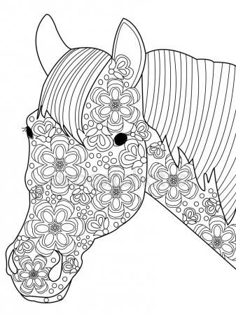 Head Horse Coloring Vector For Adults Stockillustratie 110675890