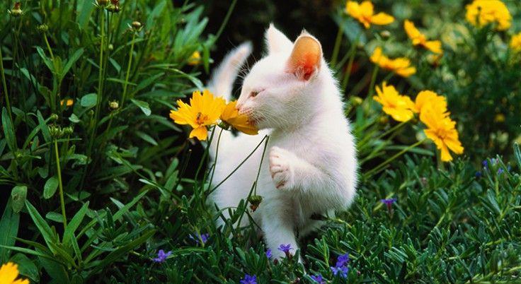8 astuces pour éloigner les chats du potager