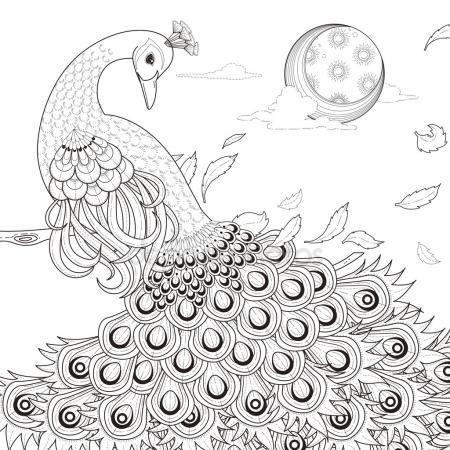 Página para colorear de pavo real agraciado Vector De Stock ...