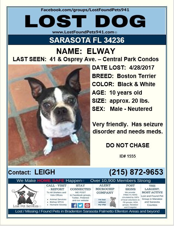 Have You Seen Elway Lost Dog Bostonterrier Sarasota Fl Lostdog Sarasotacounty Lostpetservices Please Rt Share Losing A Dog Losing A Pet Service Animal