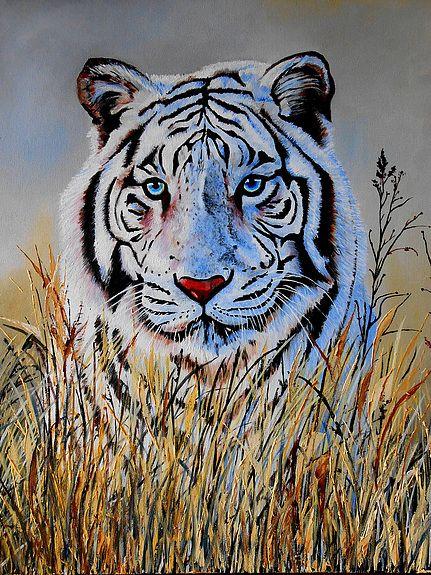 Tigre blanc best tattoo anima - Tigre blanc dessin ...