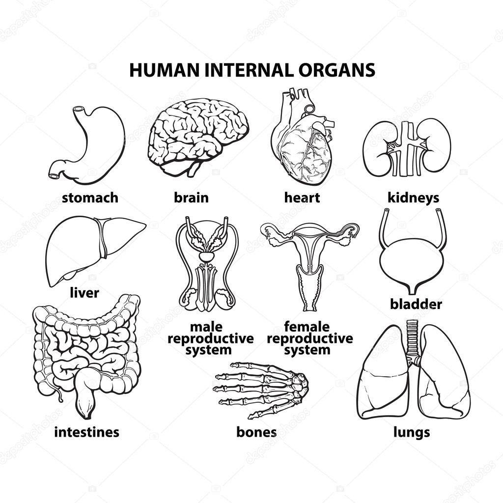 Integumentary System Labeling Worksheet Layers The Epidermis Worksheet In 2020 Human Body Diagram Organs Body Anatomy