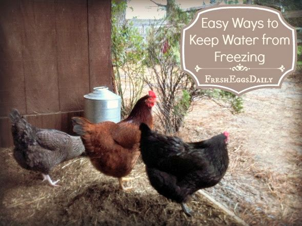 Five Easy Ways to Keep your Chickens Water from Freezing ...