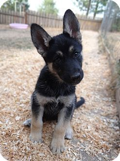 Oregon Some Puppies For You Pinterest Dogs Husky And Puppies