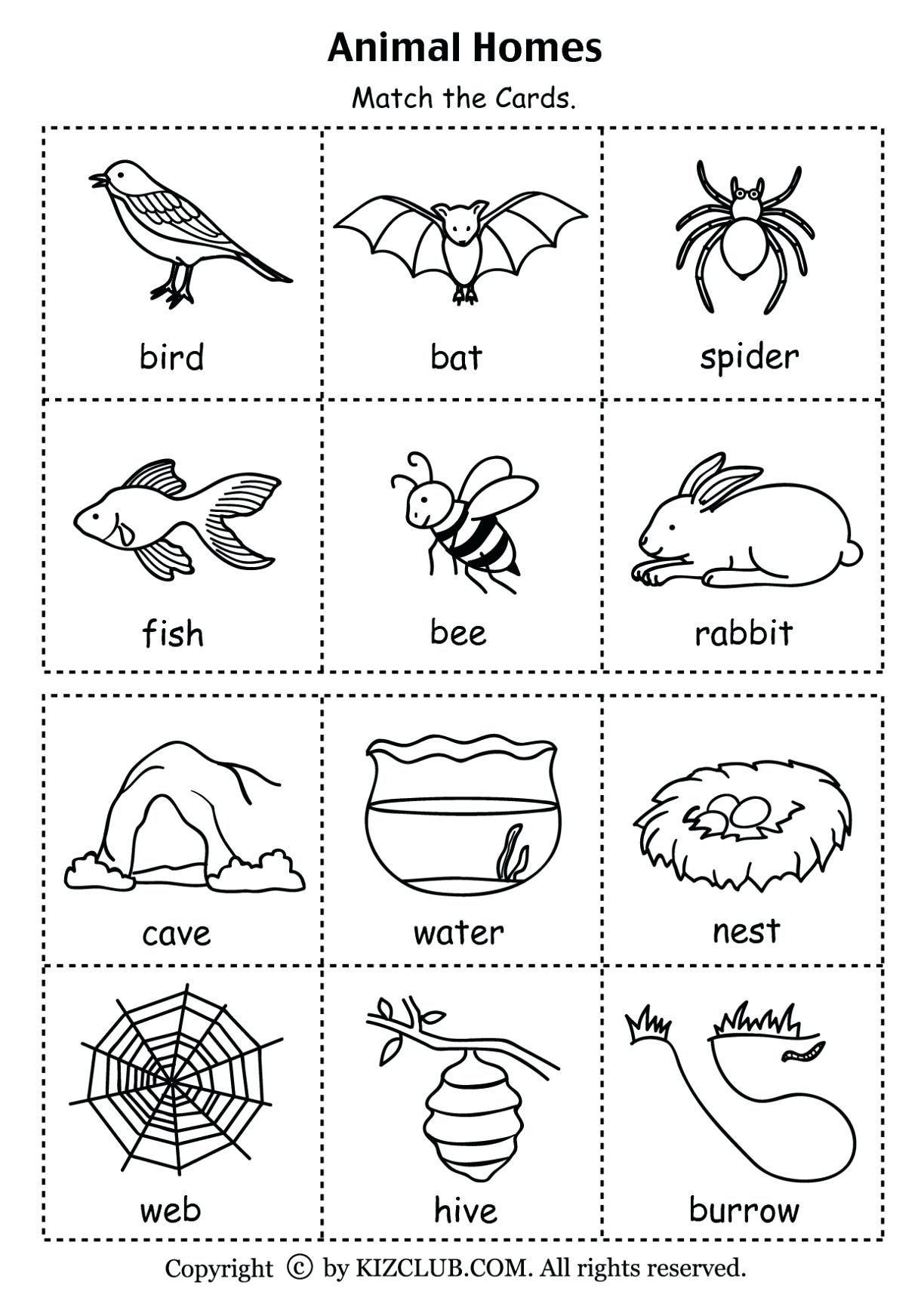 1st Grade Worksheet Science For Download 1st Grade
