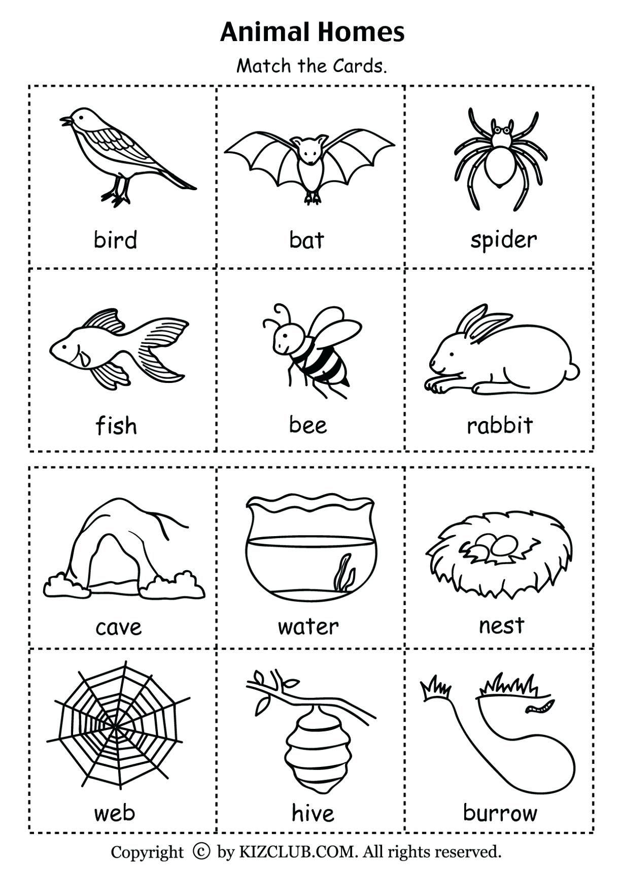 1st Grade Worksheet Science For Download 1st Grade