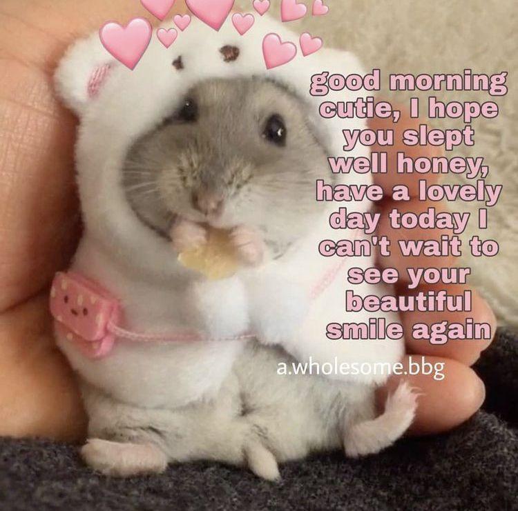 Send To Someone U Love Or Like Funny Good Morning Memes Flirty Memes Good Morning Meme