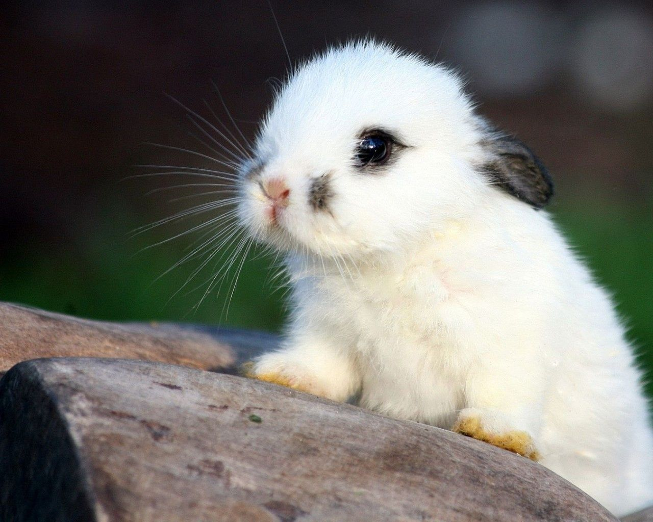 Cute White Baby Bunnies Hd Pictures 4 Hd Wallpapers Lzamgs Com Cute Animals Cute Baby Bunnies Baby Animals