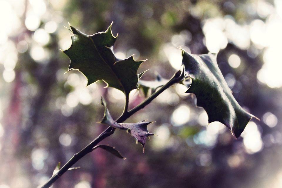 Sivuliike, Lehdet, Pensas, Kevät, Luonto, Vihreä
