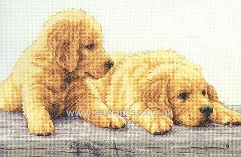 Shop Online For Golden Retriever Puppies Cross Stitch Kit At