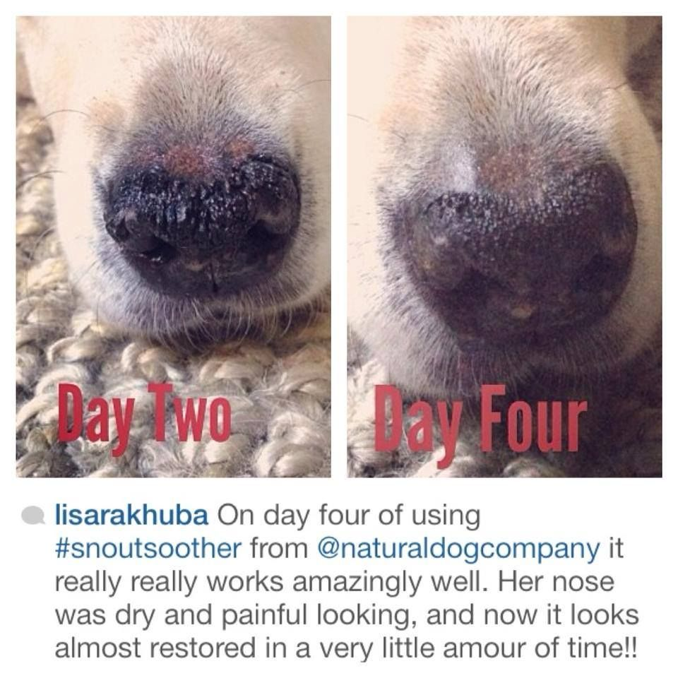 Amazing news from another happy customer! You know we love hearing from you - send us your before and after pictures to Bark@NaturalDogCompany.com  #snoutsoother #dogs #puppies #drynose