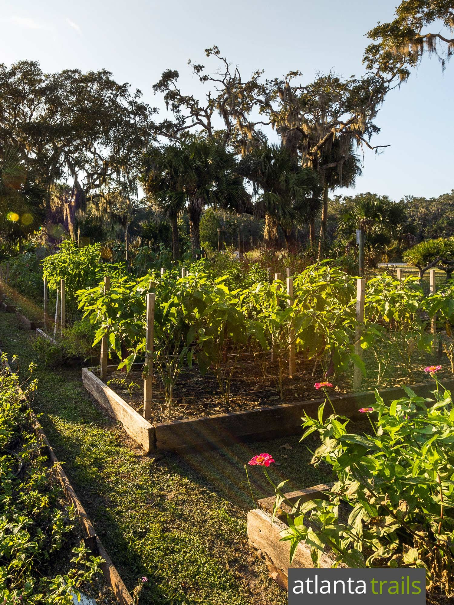 Little St Simons Island: local seafood and garden-to-table produce ...
