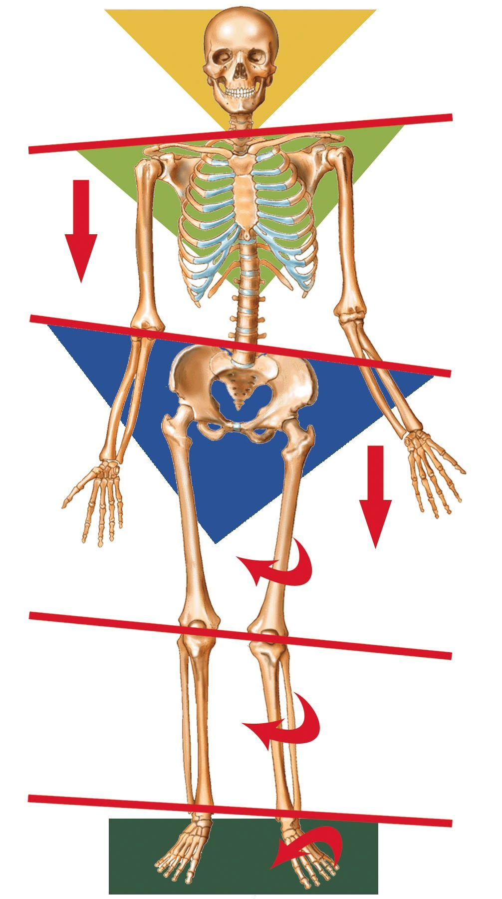 En Terapia neuraL, una mala postura es indicación de tratamiento ...