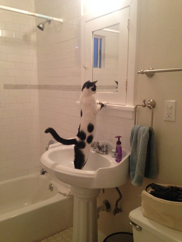 A cat having an existential crisis in a sink… | 25 Animal Pictures That Will Restore Your Faith In Animals