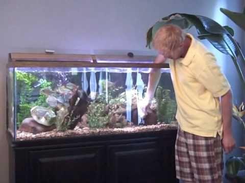 How To Clean A Fish Tank Aquarium Part 1 Fish Tank Fish Tank Cleaning Pet Fish