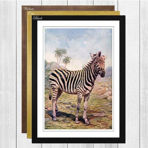 Photo of Gerahmtes Poster Vintage Natural History Zebra, Kunstdruck