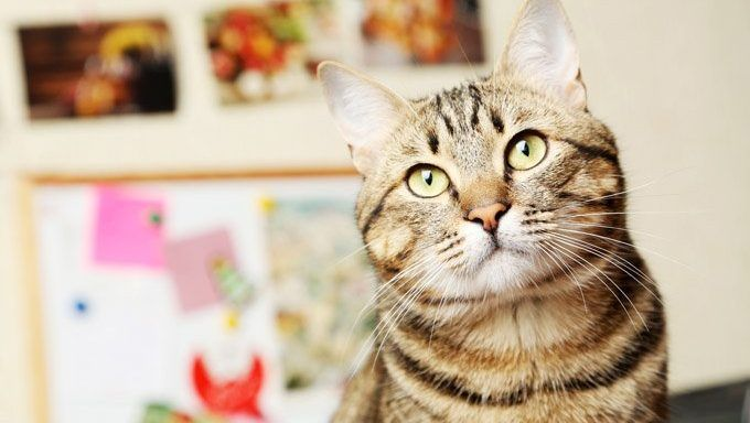 Do You Know Cats? Find Out With 11 More Random, Amazing