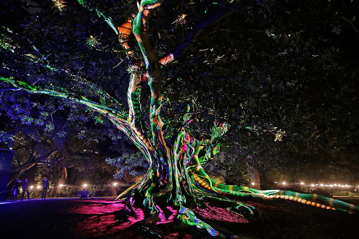 Image Result For Tree Projections Light Garden Of Lights Light Show Pictures Of The Week