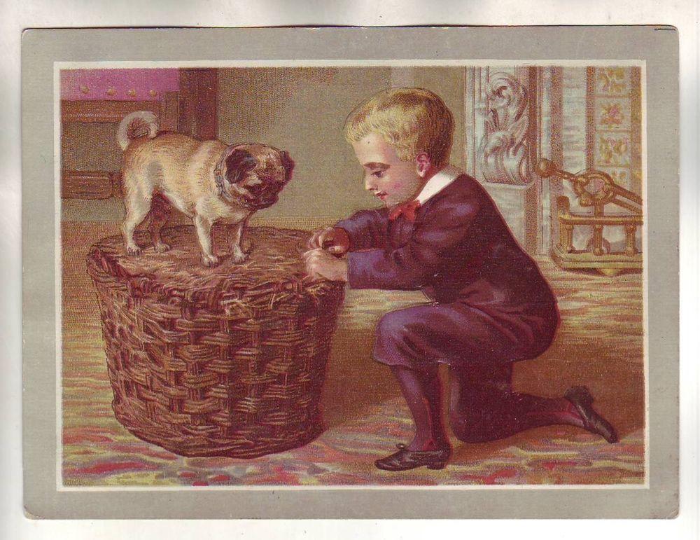 Darling Vintage Trade Card Pug Dog Animal Basket Boy Fashion Victorian Scrap Pug Love Pug Lover Pugs