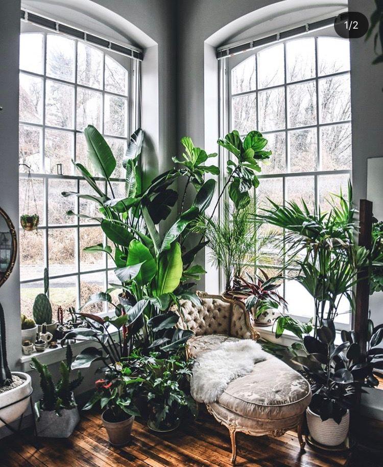 Nursery Indoor Plants Near Me: Pin By Sal Garcia On Home Schemes