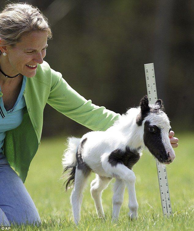 Meet Einstein, the world's smallest horse who weig