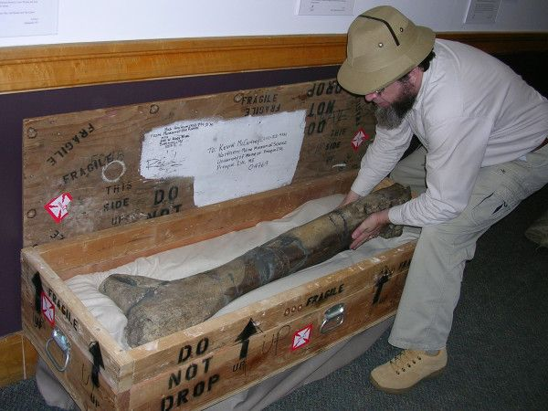 Geology professor at UMPI, Dr. Kevin McCartney has been offered the U.S. Fulbright Scholar Program grant. Thanks to the Museum of the Rockies in Montana, the University of Maine at Presque Isle has now acquired a hefty gift weighing in at 200 lbs!