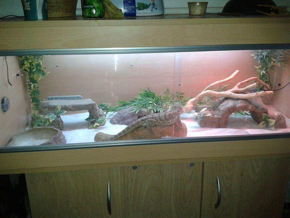 vivarium - slider doors & vivarium - slider doors | Beardies and other awesome reptilian ... Pezcame.Com