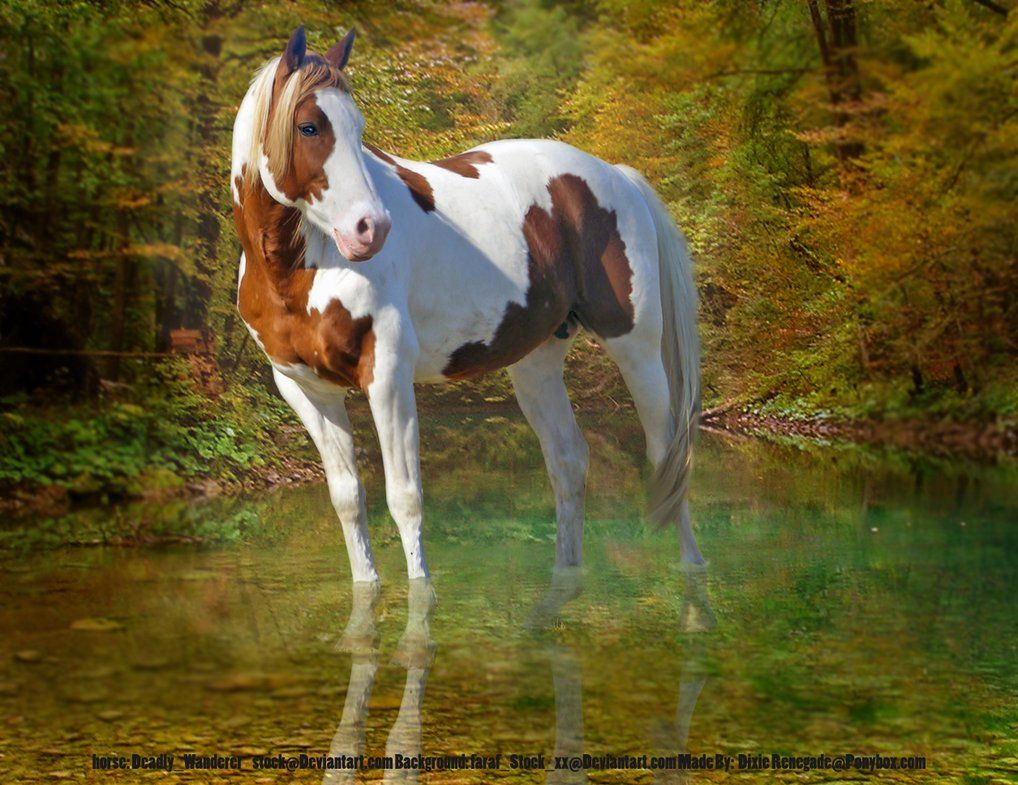 Wonderful Wallpaper Horse Deviantart - b6f6a55b56ebd8071eb1fe1c522bc01b  Snapshot_934240.jpg