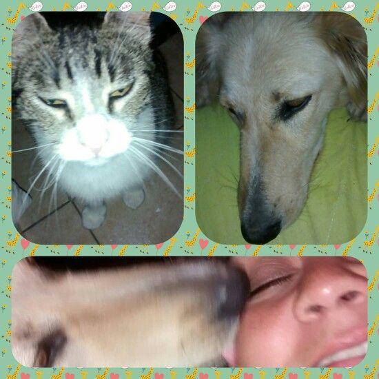 Mascotas de amor