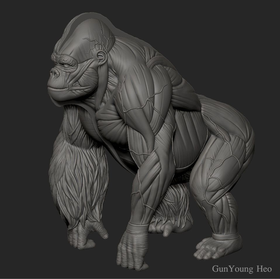 ArtStation - Gorilla Anatomy & 3D PRINT object, kunyoung heo ...