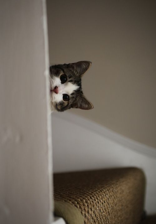 Image result for kitten peeking out from behind an open door