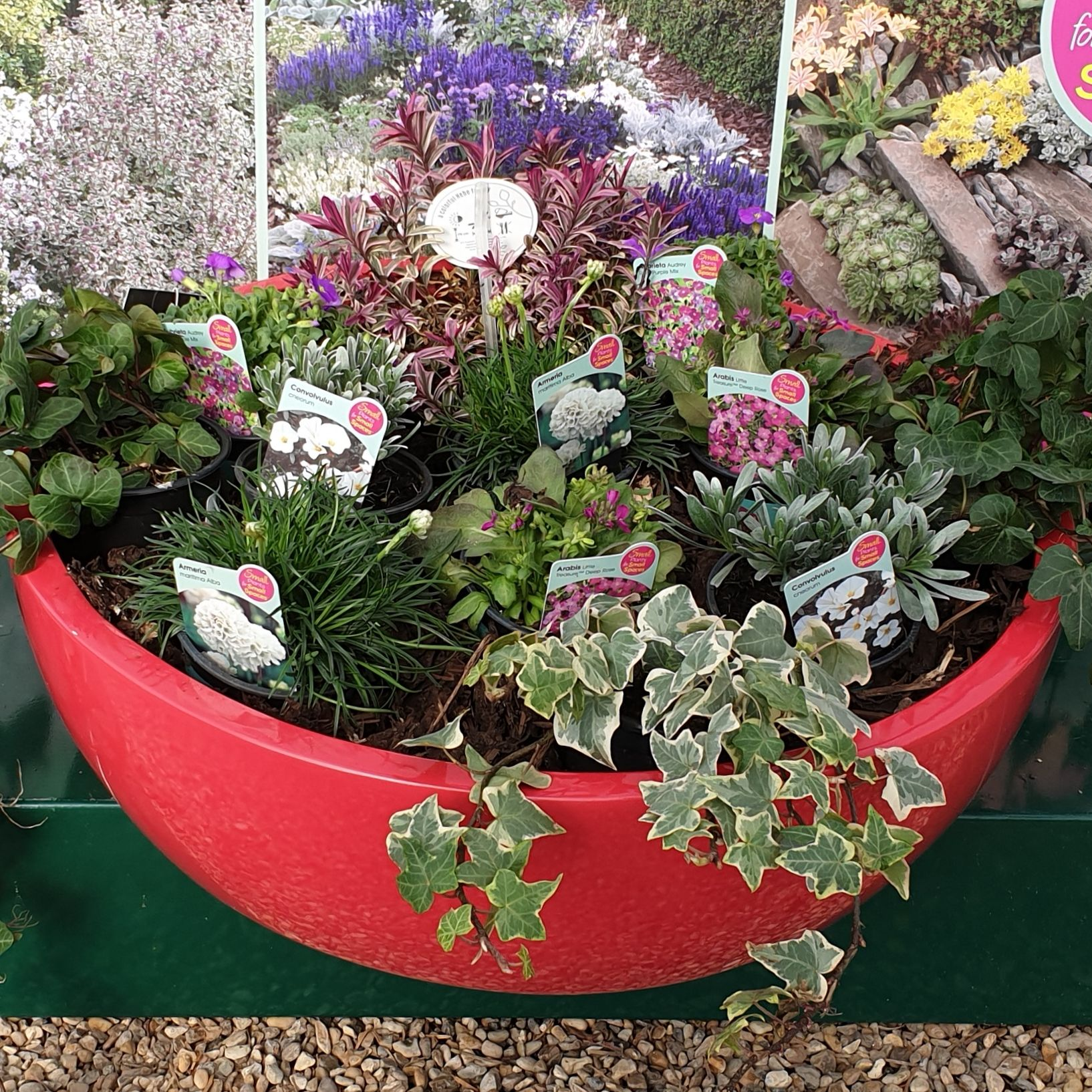 Small Trees For Borders: A Selection Of Small Plants Perfect For Filling Gaps In